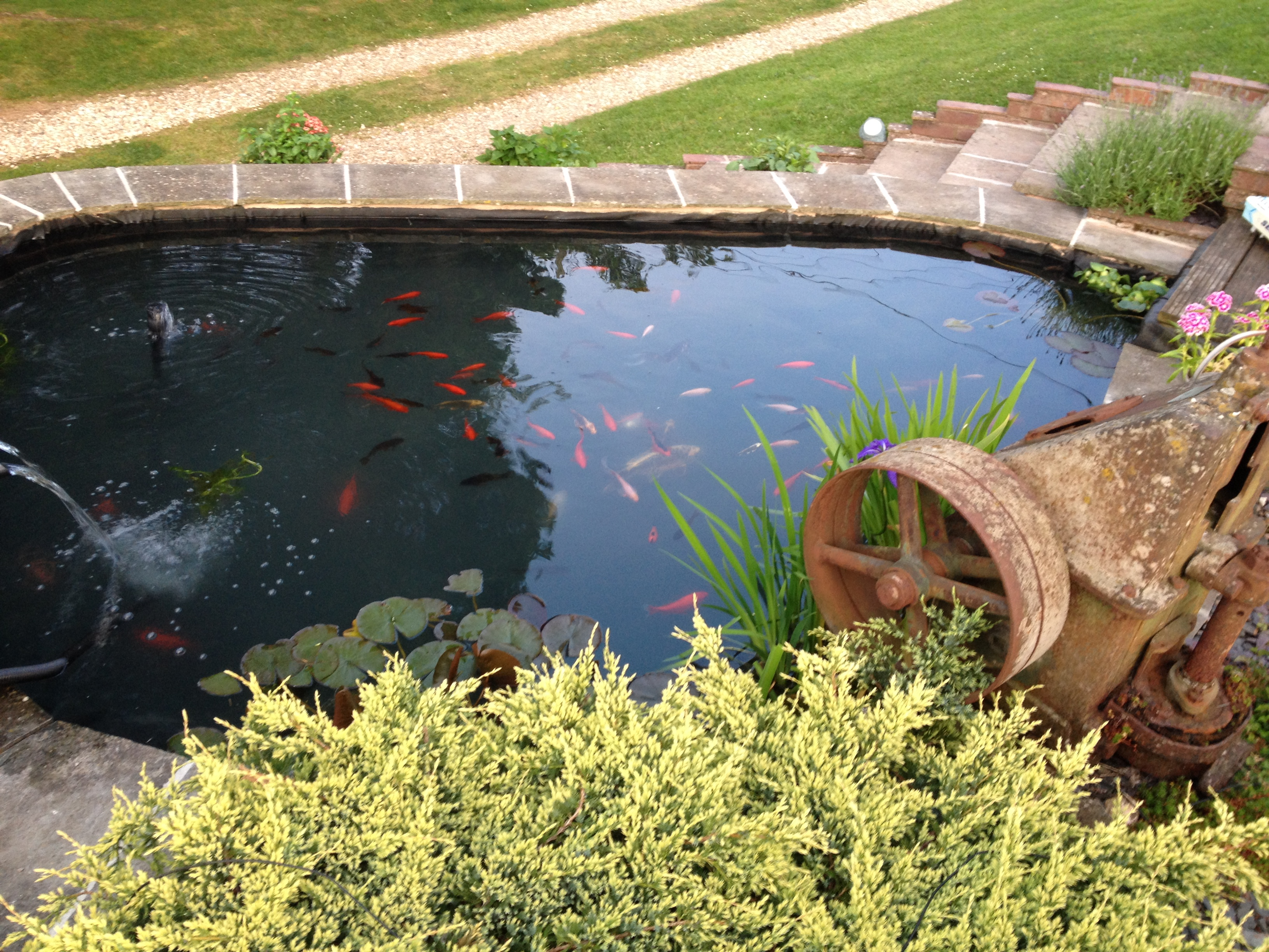 Ponds and water features marcus riggs landscaping for Ponds and water features
